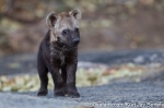photo safari, photographic safaris, photo tour, photo workshop, photo lessons, best time to go, kurt jay bertels, 50 safari, 50 photographic safaris, wildlife photography, photography, wildlife, south africa, spotted hyena, pup, cub, baby